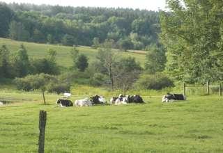 Springer Hill Farm
