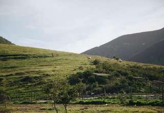Near Santa Maria/Ynez Wineries