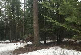 Whitetail Woods