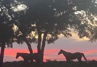 Little Red Hen Ranch