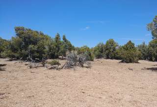Marc V.'s Land