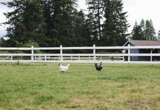 The Happy Horse Farm