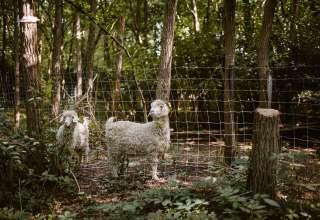 Urban Farm  - Forever Growing
