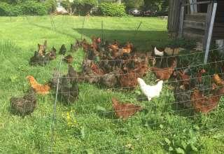 Oak Spring Farm