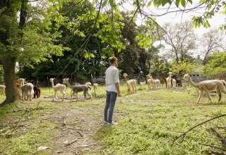 Hidden Pastures Fiber Farm