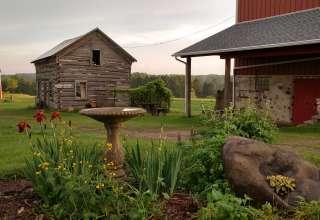 Toadally Natural Garden