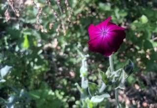 Rose Campion Pillsbury Retreat
