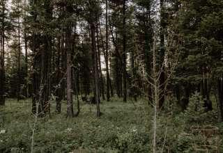 SpiritWorks Herb Farm Campground