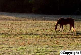 Horseland USA