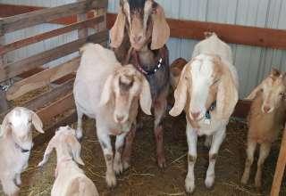 Staley's Farm