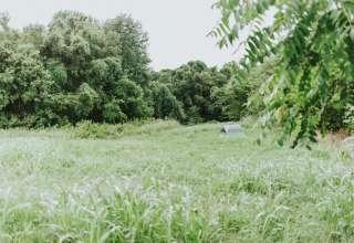 Fae Fields
