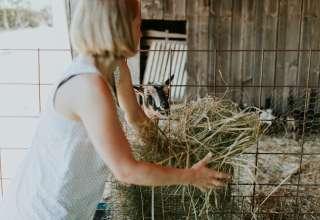Mended Meadows Farm