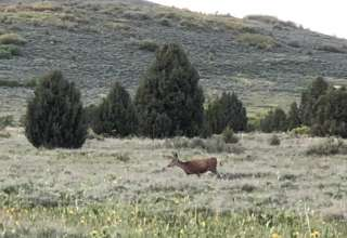 Nature Ranch Campsite