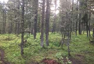 Bear's Backcountry Retreat