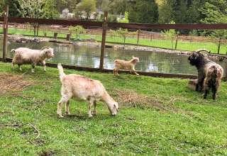 Dragos Farm