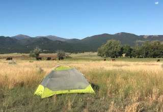 Cow Dog Camp