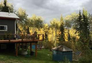 Sunny Spruce