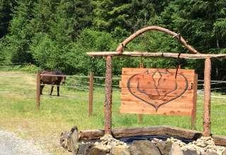 HSFH Orphan Foal Rescue Camp