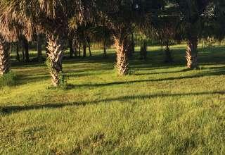 Sandra D.'s Land