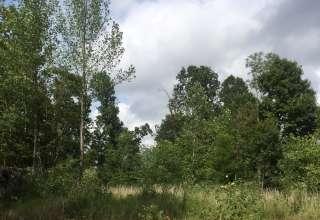 Flora and Fauna Camp