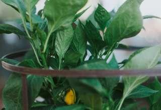 Bierbaum Pepper Farm Experience