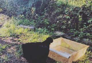 Cheshire herbal farm and sanctu