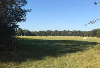 Farm by Suwannee at Rock Bluff