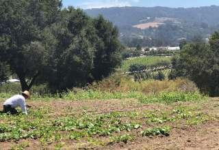 Permaculture Garden Hideaway