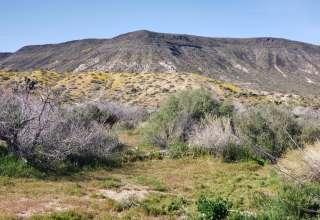 Lauren's Land