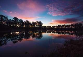Charleston Woodlands