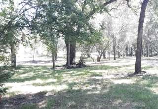 Malu under the oaks