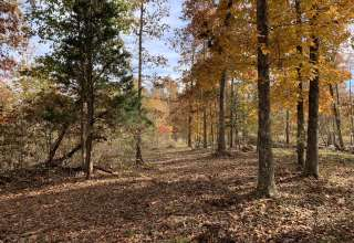 Wanderland - 5 Wooded Acres