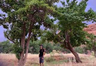 Narrow Canyon Orchards & Oasis