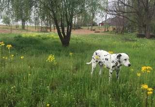 The Art Farm Women's Retreat