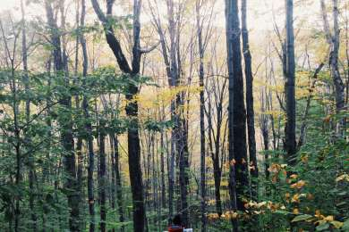 Catskill State Park
