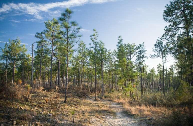 Kisatchie National Forest