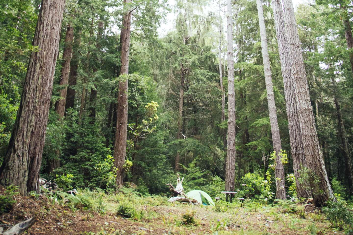 Redwoods By The Sea Camping