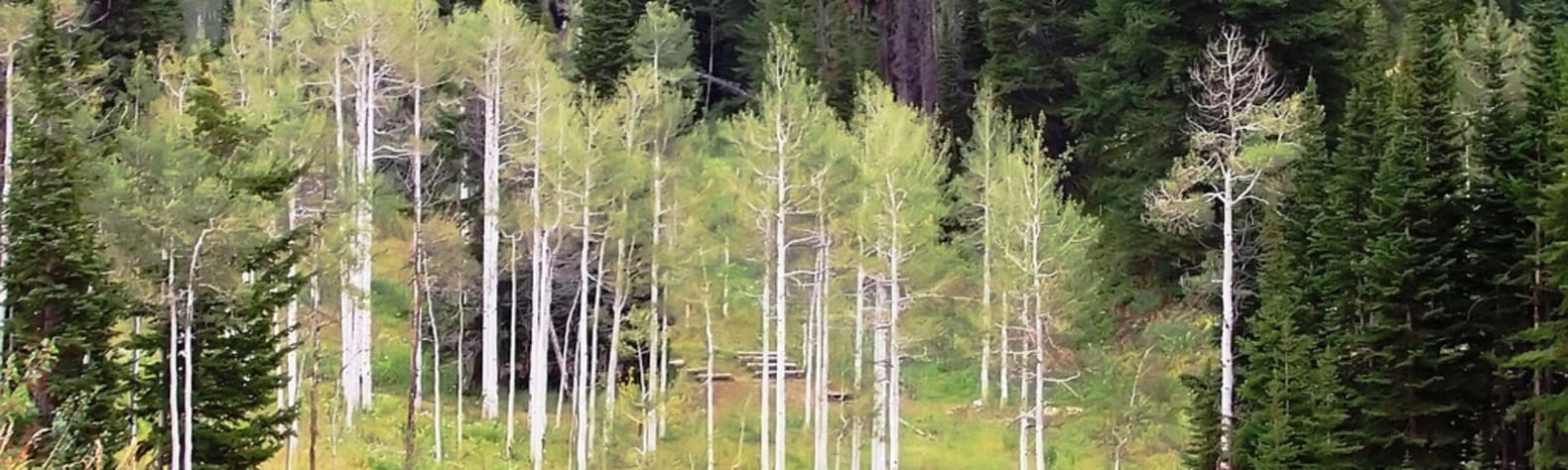 Best Camping in and Near Targhee National Forest