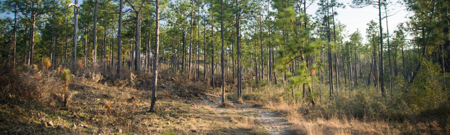 Kisatchie National Forest Vehicle Use Map on