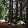 Redwood Camp