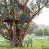 Treehouse at Swallowtail Studio