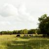 Ranchview Tent site