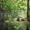 Baby Bears Camp