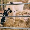 Dogwood Hills Guest Farm