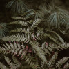 Magical Woods-Munising, MI