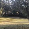 Mississippi Pine Groves