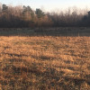 Pristine Forestry