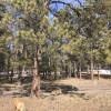 Dogcamp
