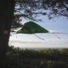 Breathtaking Tree Tent