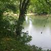 River Bluff Woods